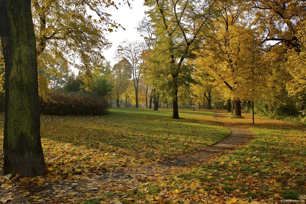 Fall In Berlin - Volkspark Friedrichshain Autumn Leaves
