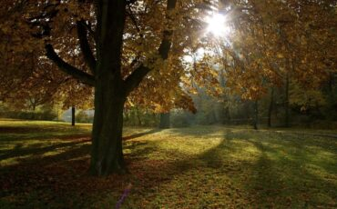 Fall In Berlin - Volkspark Friedrichshain Autumn Sun