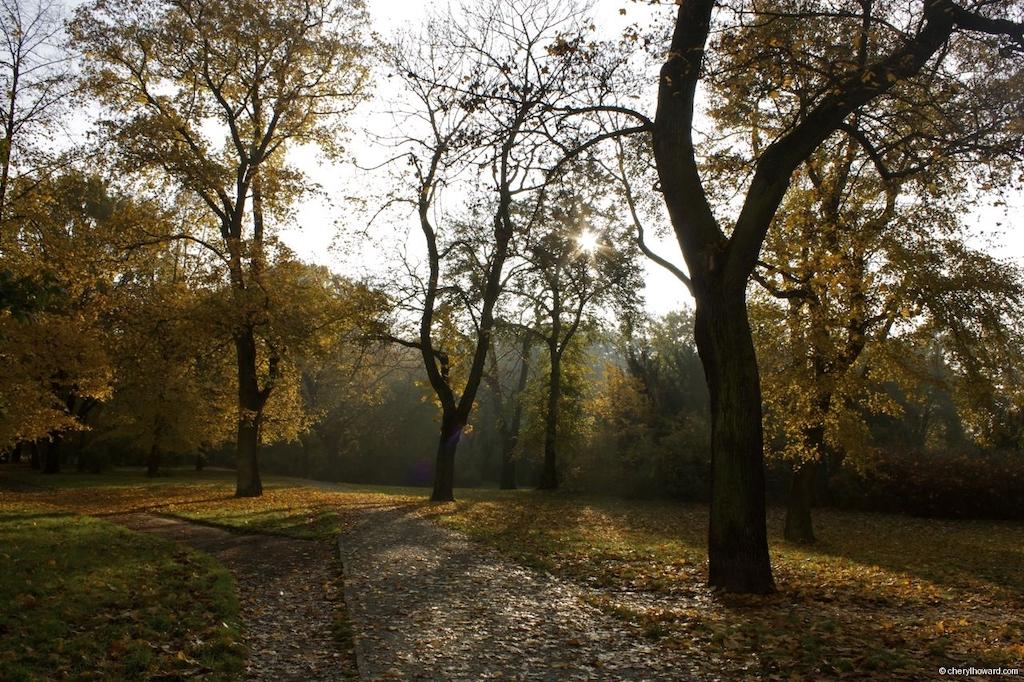 Fall In Berlin - Volkspark Friedrichshain Autumn