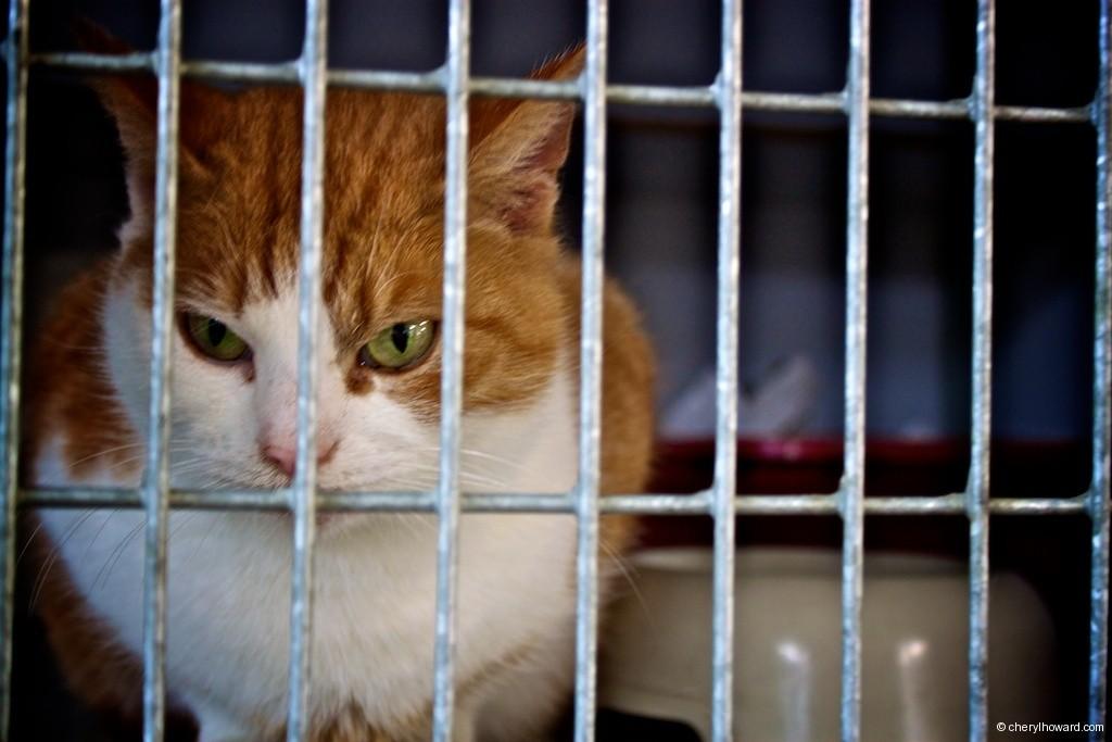 Cat Boat Amsterdam Cat Cage
