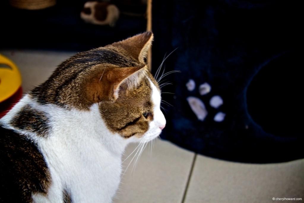Cat Boat Amsterdam Cat Closeup