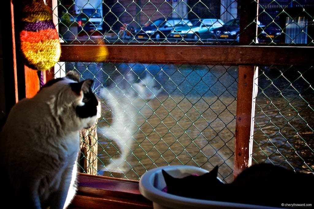 Cat Boat Amsterdam Cats Reflection