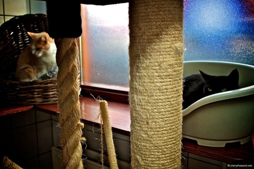 Cat Boat Amsterdam Cute Cats