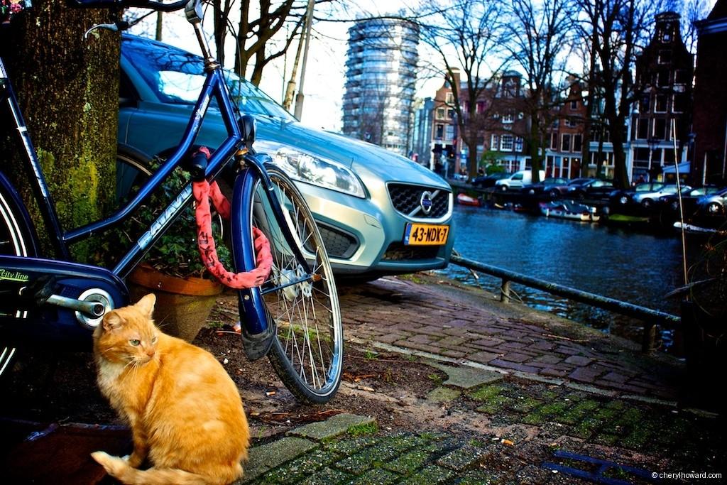 Cat Boat Amsterdam Orange Cat Outside