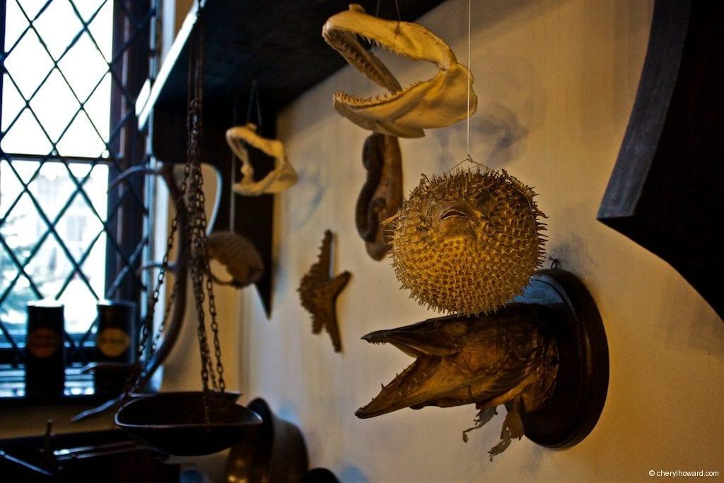The Pharmacy Museum in Krakow - Animals