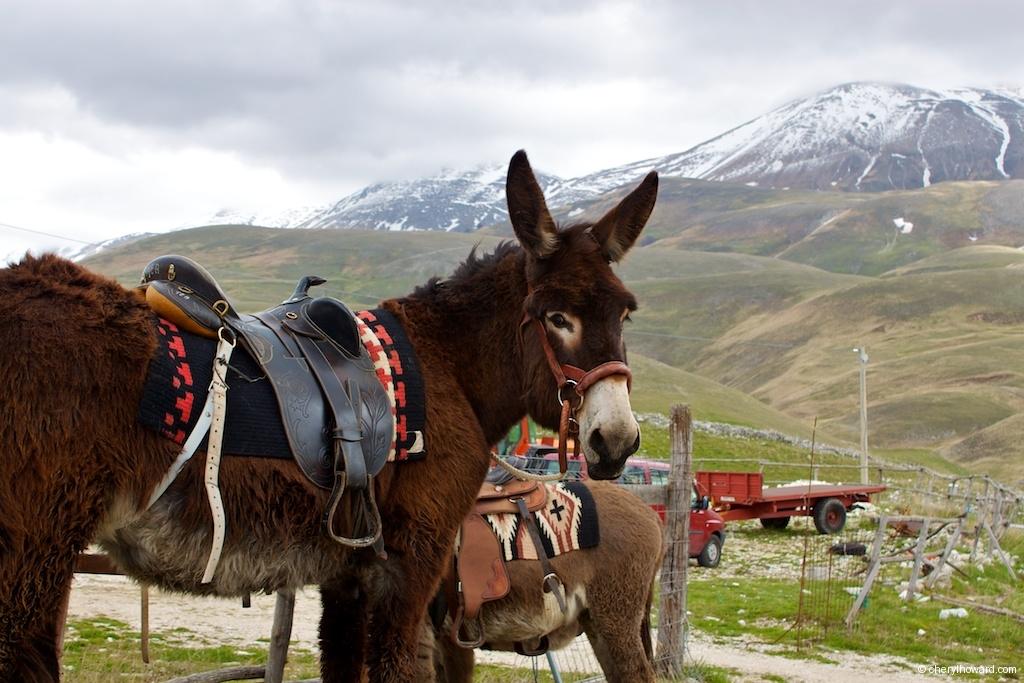 Monti Sibillini National Park - Donkeys