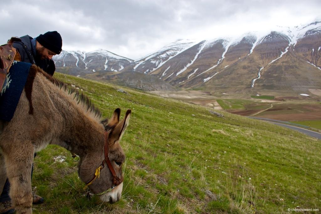 Monti Sibillini National Park Donkey Eating Grass