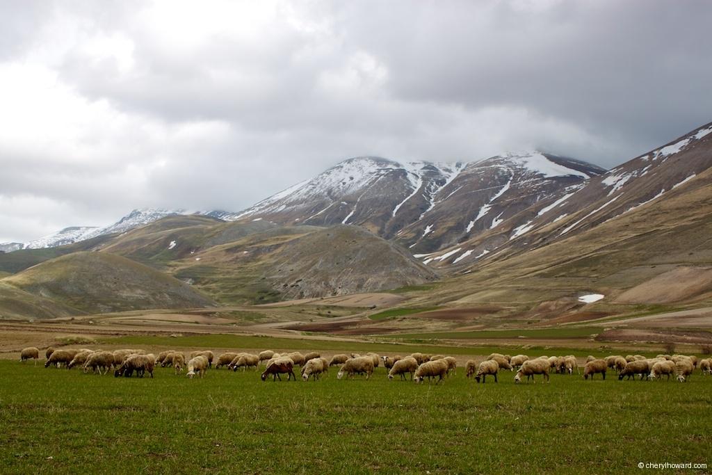Monti Sibillini National Park Sheep Grazing
