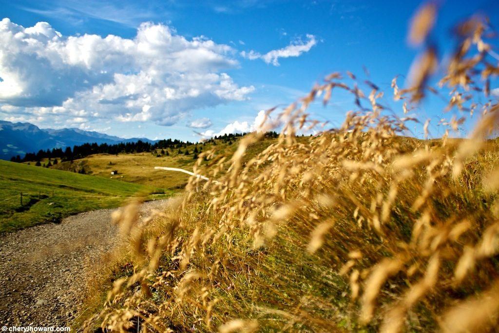 Visit Alpe Di Siusi Italy Weeds