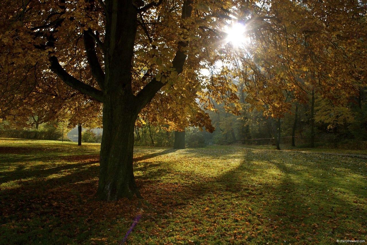 Fall in Berlin.