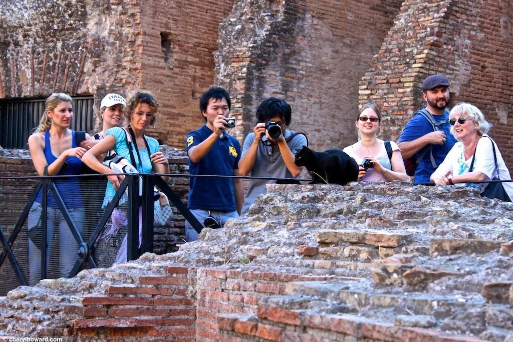 Rome Photos - Coliseum Cats