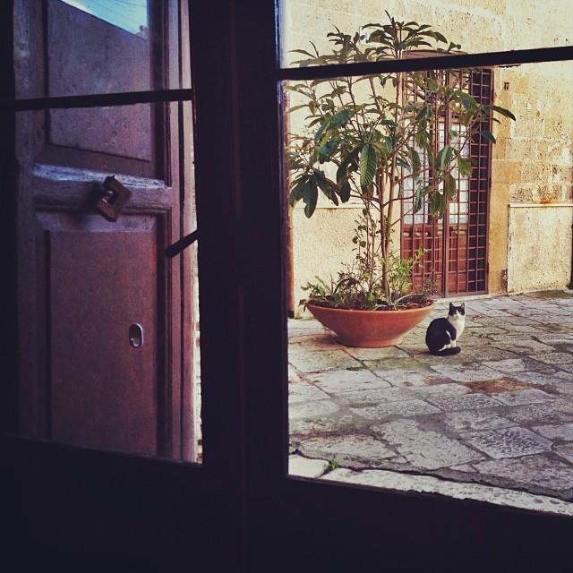 Reasons to Visit Brindisi - Brindisi Cats