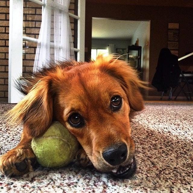 Whisky Valentine Dog