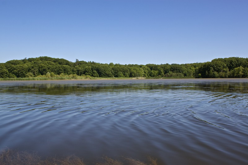 Canoeing in Cootes Paradise