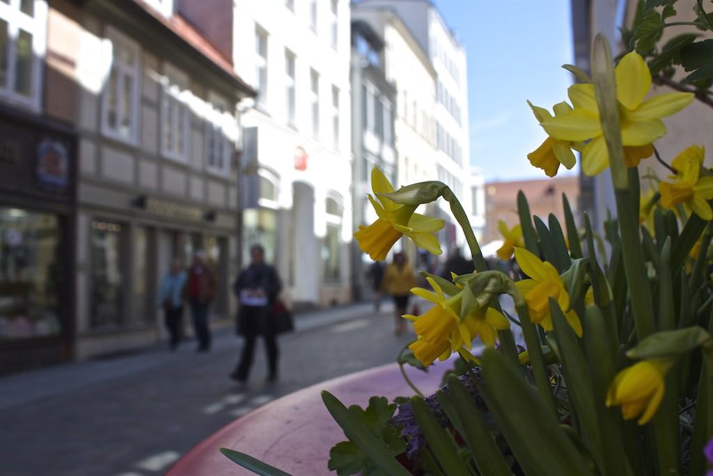 Schwerin Photos - Flowers Along the Street