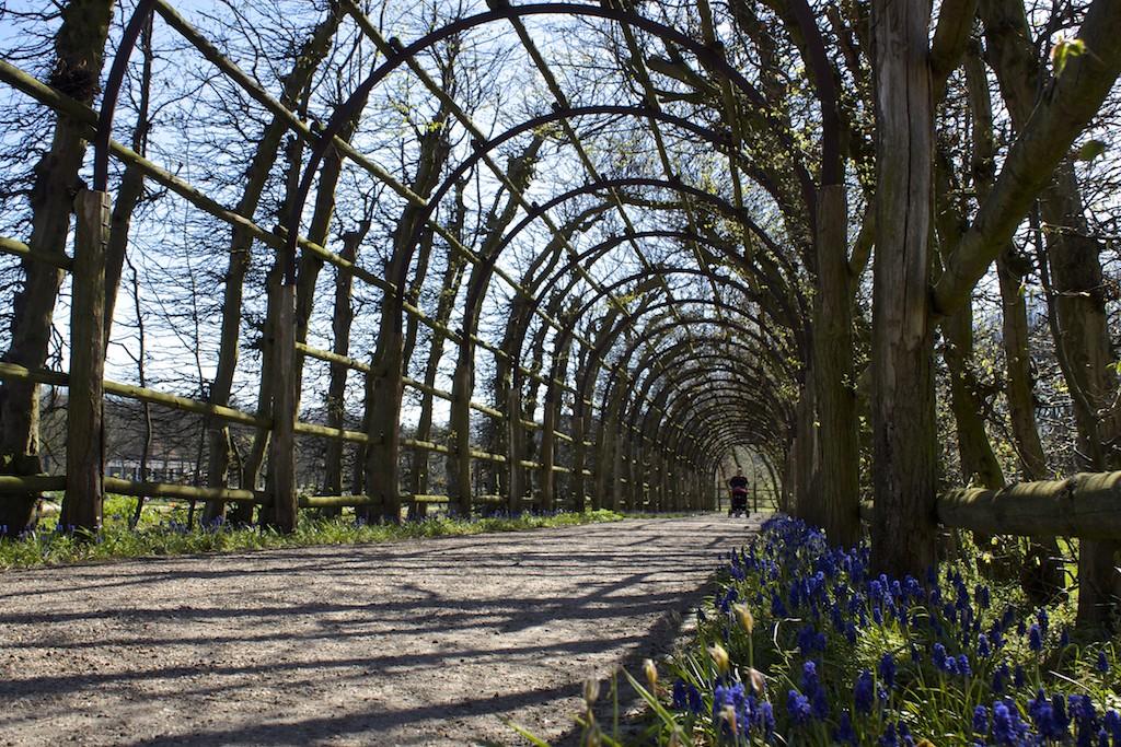 Schwerin Photos - Schlossgarten Flowers