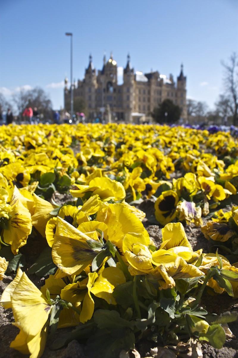 Schwerin Photos - Schwerin Palace Flowers