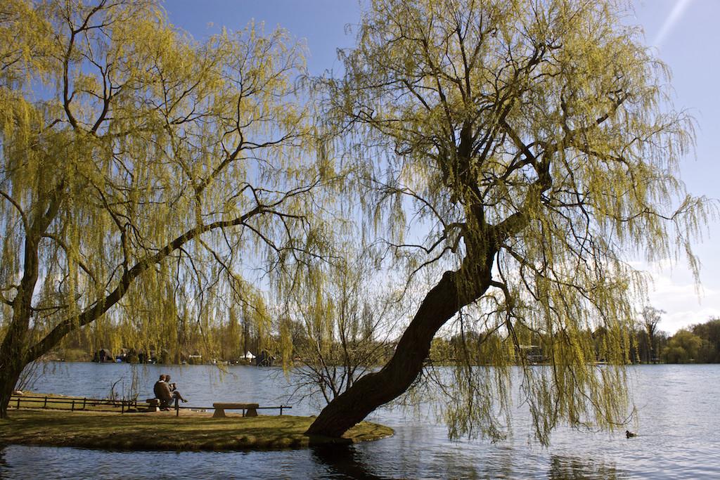 Schwerin Photos - Schwerin Palace Trees in Burggarten
