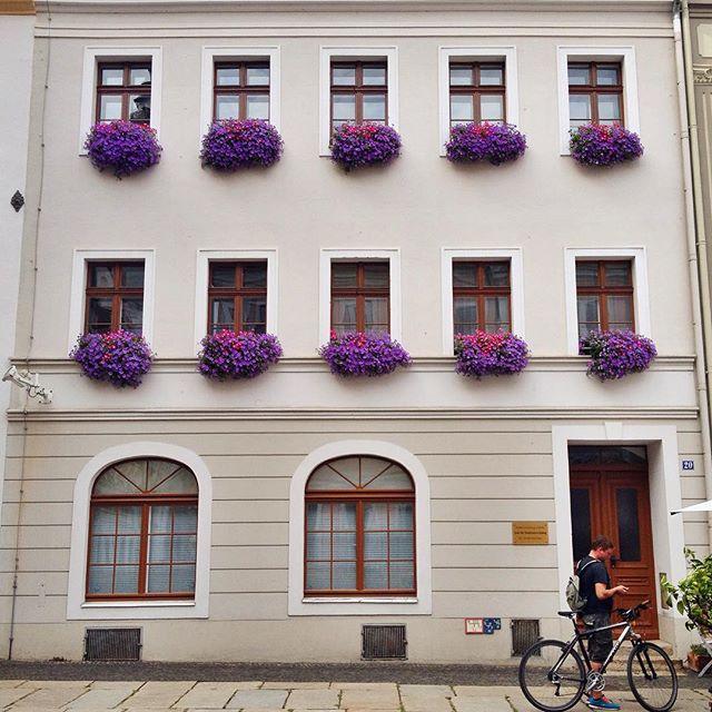 Görlitz Photos - Die Blume