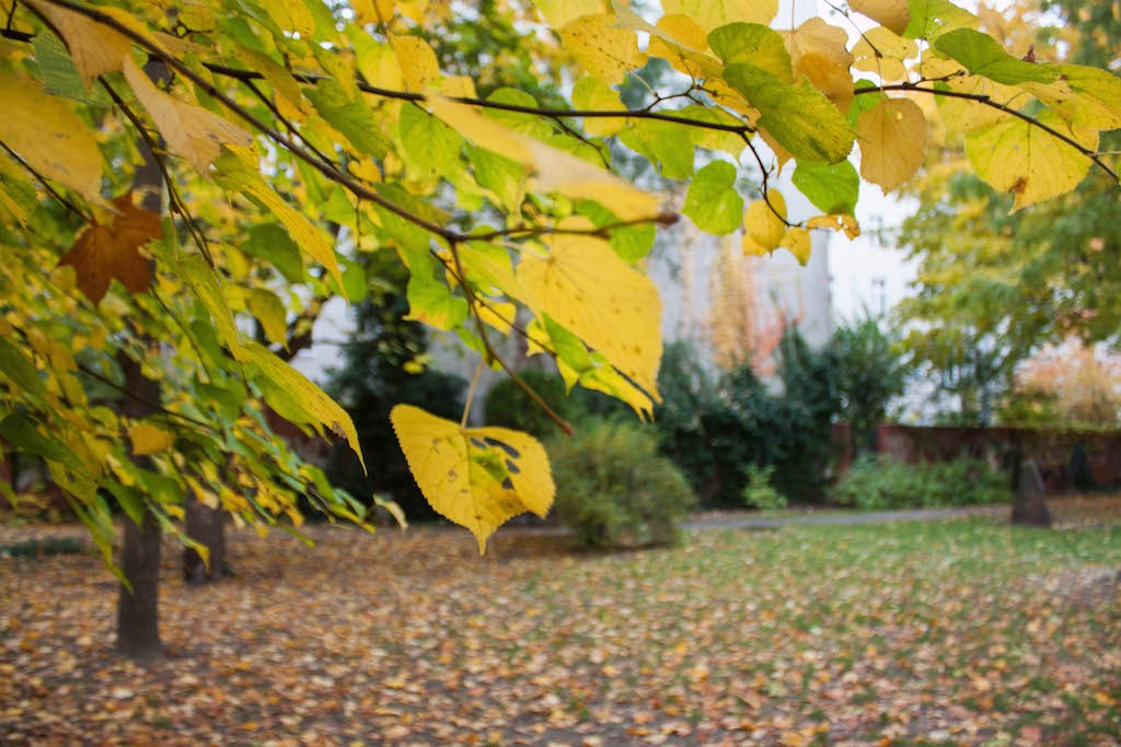 Berlin Sunday Fall Up Close on Pappelalle