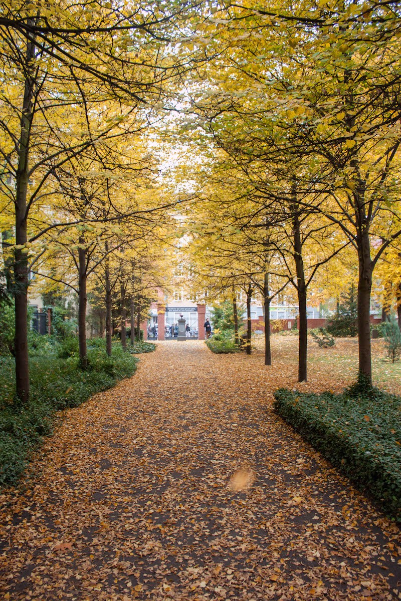 Berlin Sunday Fall on Pappelalle Leaves