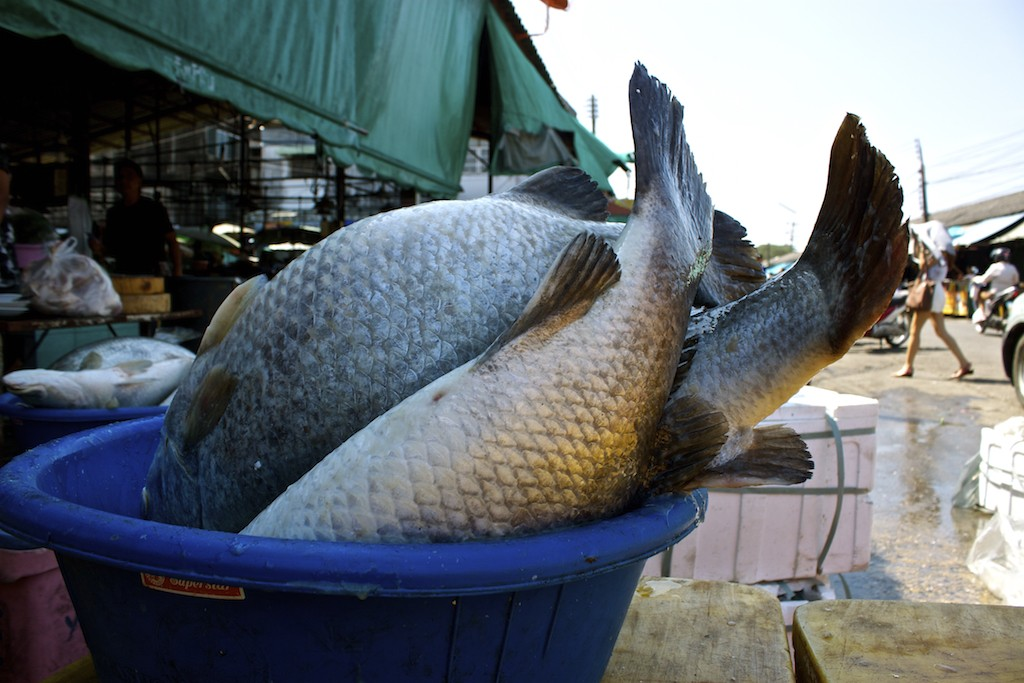Markets in Trang Fish