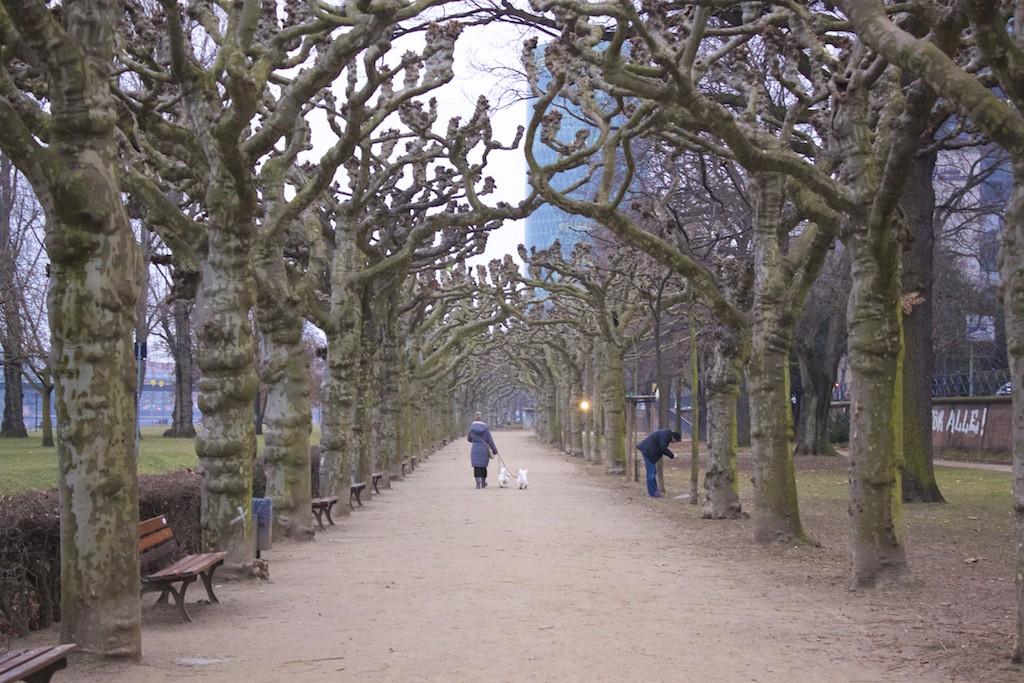 Frankfurt Photos - Museumsufer Trees Main River
