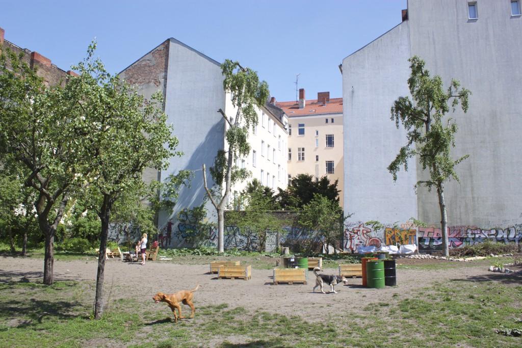 Berlin Walking Food Tour - Rixdorf Dog Park