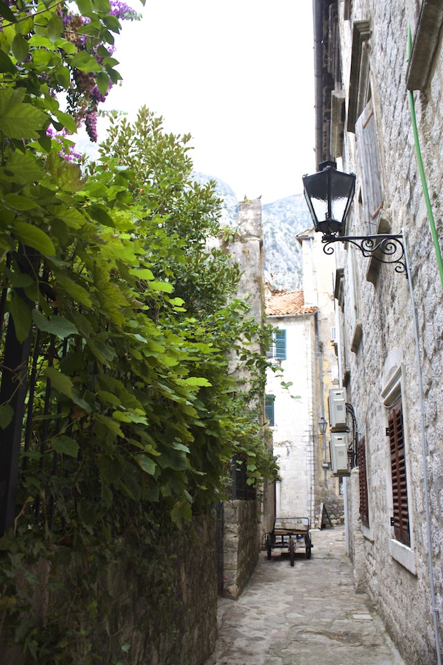 Kotor Montenegro - Ivy Covered Wall