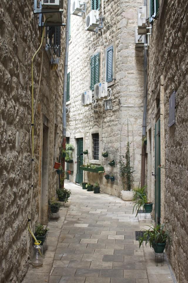 Kotor Montenegro - Plant Covered Street