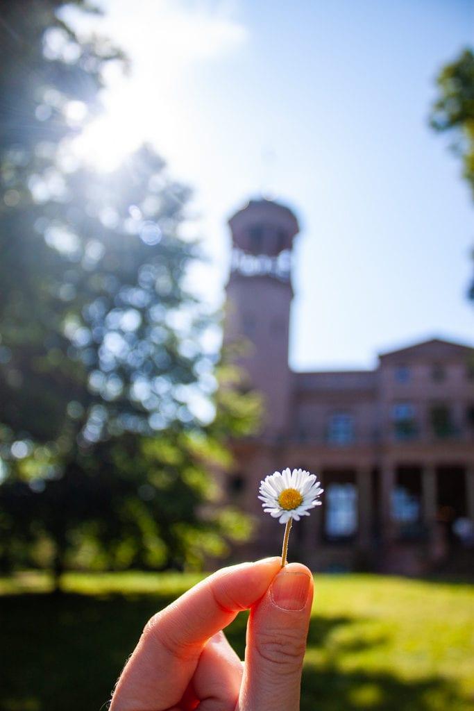 Schlosspark Biesdorf Berlin - Flower and Sunshine