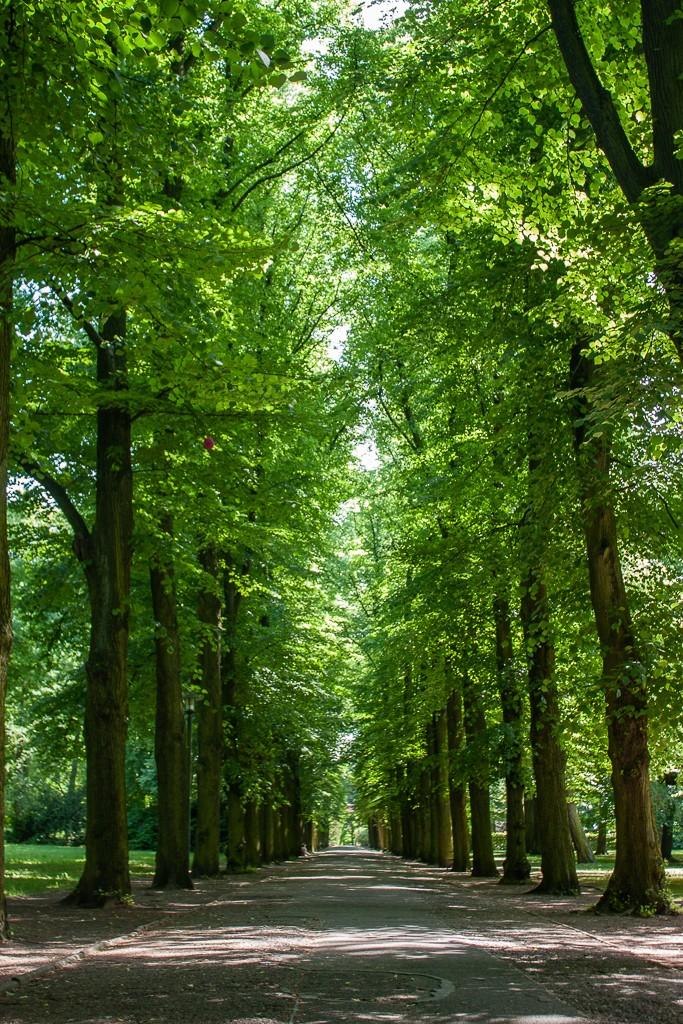 Schlosspark Biesdorf Berlin - Trees