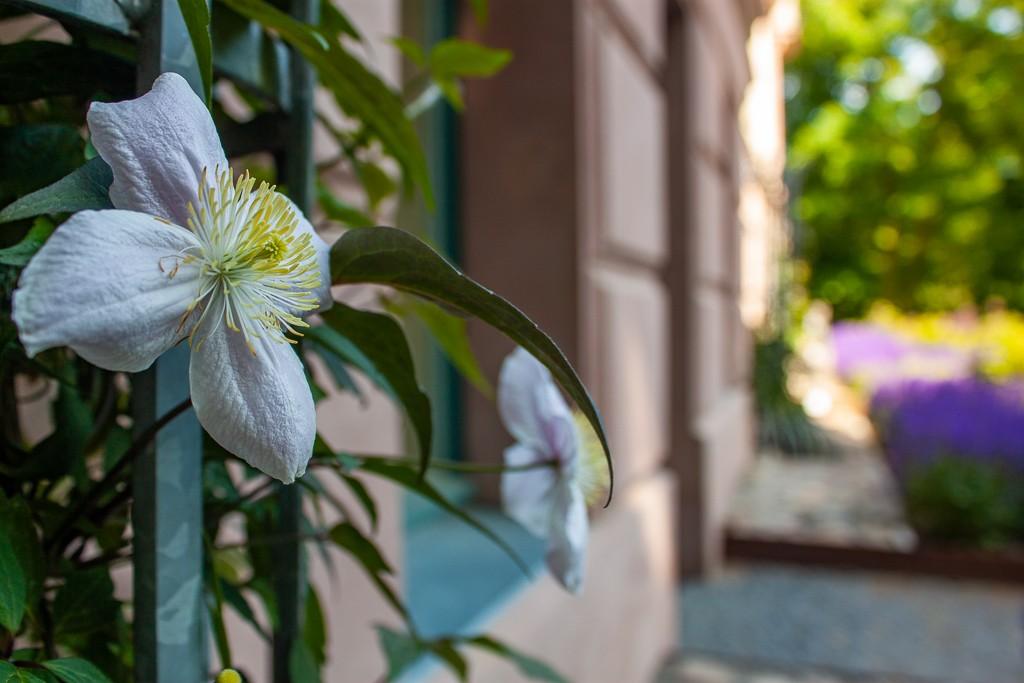 Schlosspark Biesdorf Berlin - White Flower