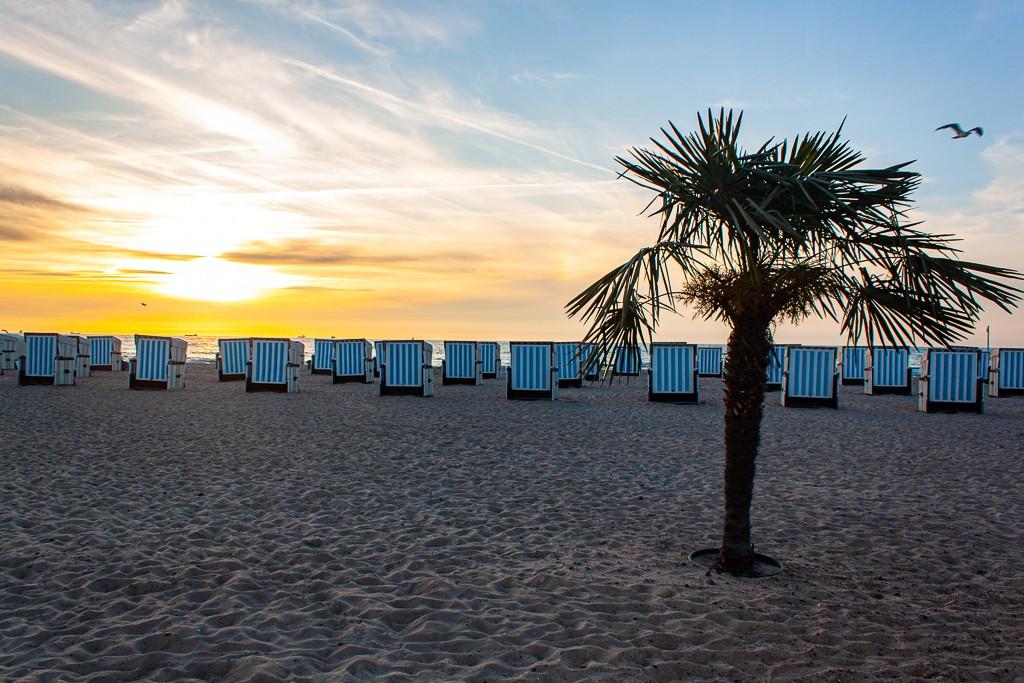 Warnemünde - Palm Tree