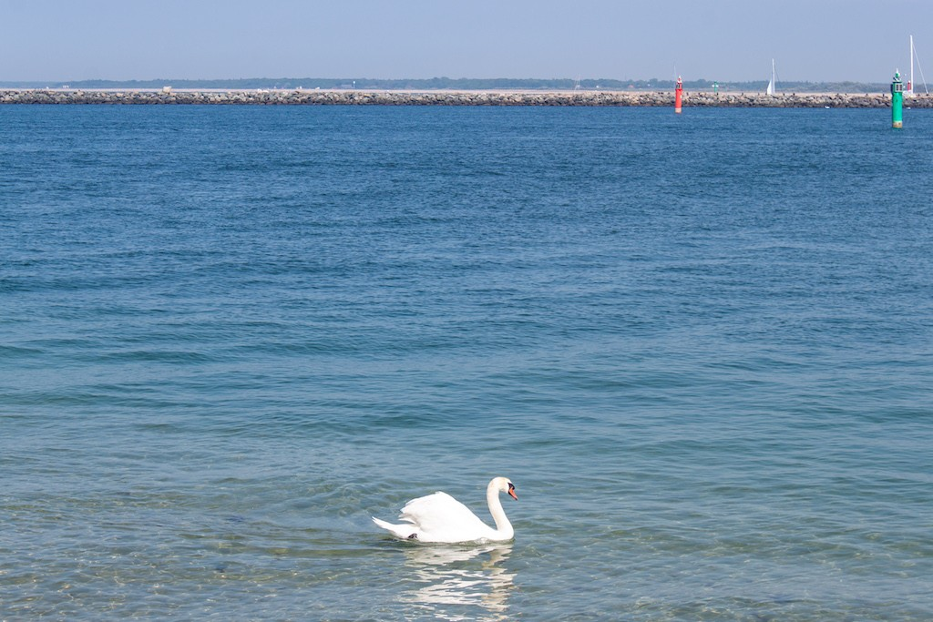 Warnemünde Swan