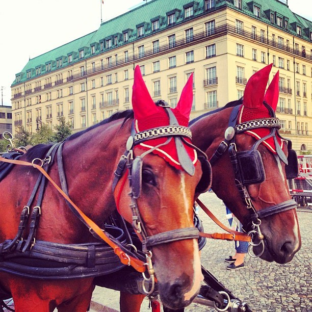 Horses at Pariser Platz