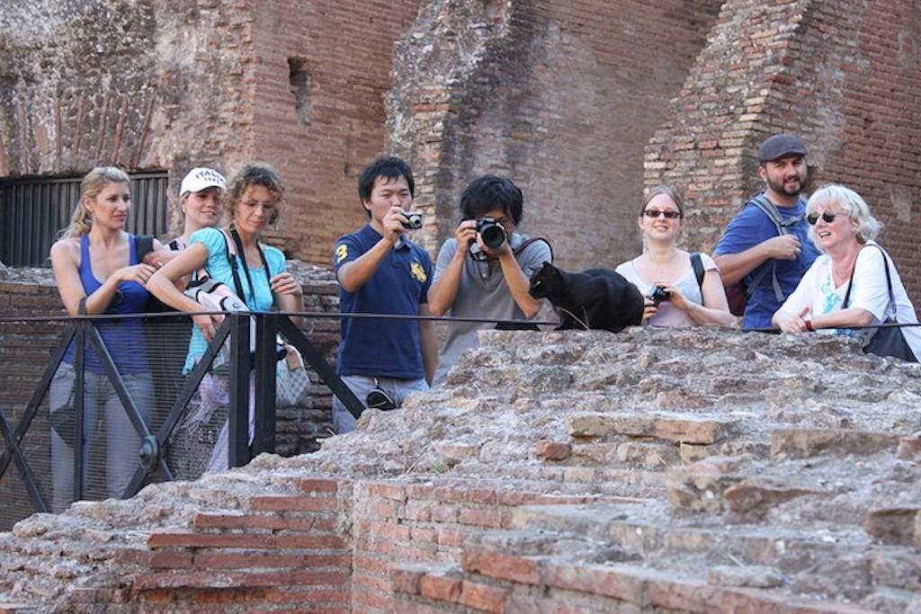 Cats In the Roman Coliseum