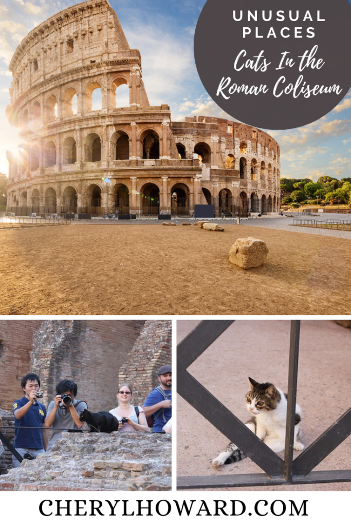Cats In the Roman Coliseum - Pin