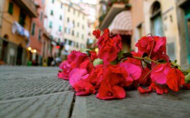 The Day Of San Giovanni Battista In Riomaggiore, Italy Flower Petals