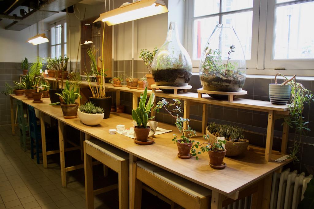 Plants At The Lloyd