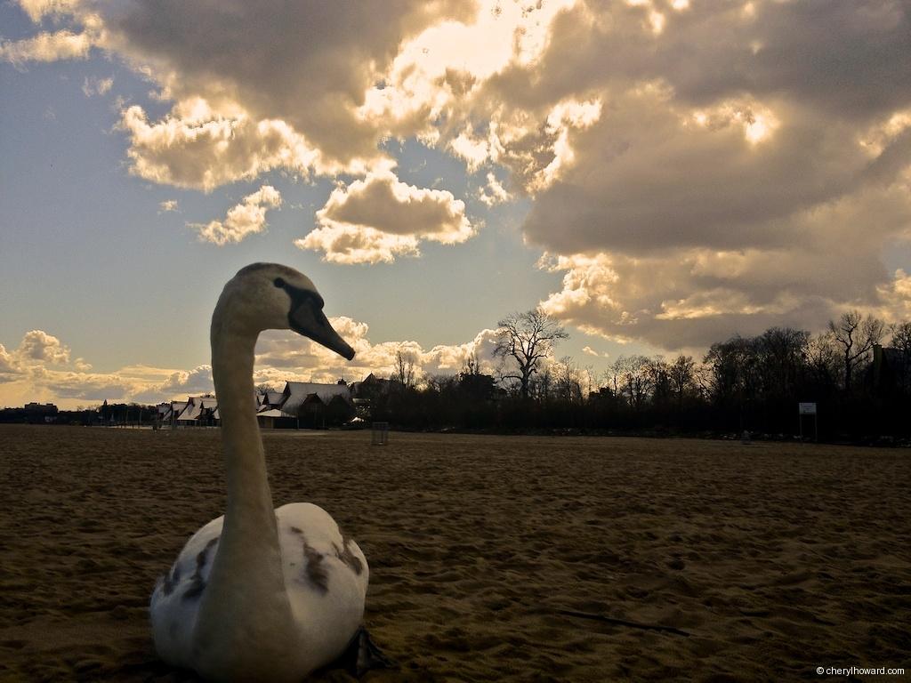 Sopot Poland Swan Song