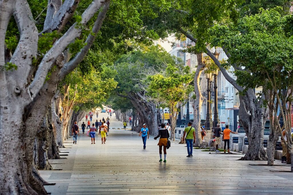 Havana Cuba Trees